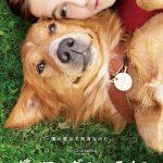 映画僕のワンダフルライフのネタバレ感想とあらすじ!犬が転生する理由を考察!
