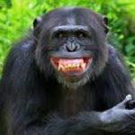 映画猿の惑星聖戦記で猿が生息していない北米で一体どこから来たのかを考察!